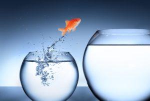 peixe mostrando como é fazer mudanças