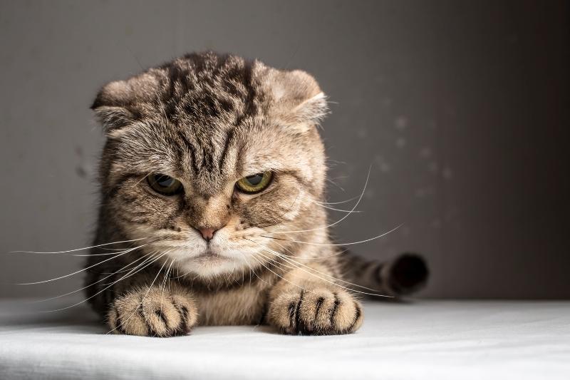 gatos podem ser bem independentess
